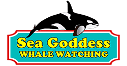 Sea Goddess Whale Watch
