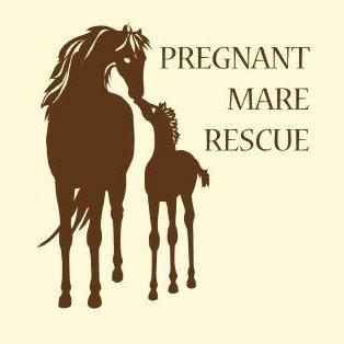 Pregnant Mare Rescue